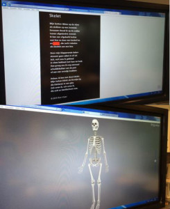 skeletopdigibord@xanwig2